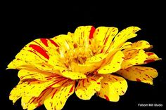 #faabest Eunice Miller http://fineartamerica.com/featured/red-on-yellow-eunice-miller.html#comment7219789