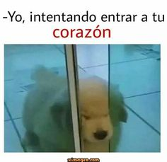 #memes #humor #imagenesgraciosas