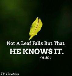 Not a leaf falls but that He knows it.