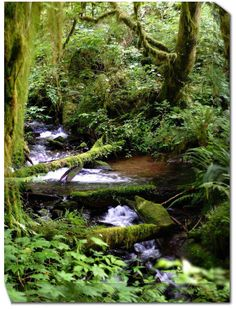 Forest Stream Weatherprint Art