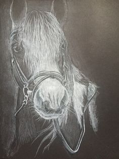 horse portrait in black and white using prismacolor pencils