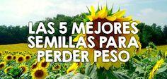 Las 5 mejores semillas para perder peso