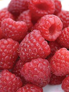 Browse a wide selection of fruit & berry seeds and plants for your home garden at Burpee. Grow robust blueberry, strawberry, raspberry and blackberry plants with high-quality fruit and berry seeds available from Burpee today. Raspberry Plants, Red Raspberry, Fruit Plants, Fruit Garden, Edible Garden, Fruit Trees, Trees To Plant, Fruit Bushes, Raspberry Seeds