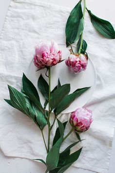Peonies love them! Reason that I have them tatted on my back for my grandmothers! JLN
