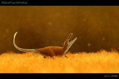 Un subadulto juguetón de la especie Alioramus remotus por Julio Lacerda. Los alioramínidos (que solamente cuentan con 2 especies, ésta y A. altai, algo habitual en la clasificación de dinosaurios) eran como pequeños tiranosaurios. Los A. remotus adultos posiblemente fueran tan altos como un ser humano. Cazaban en la Mongolia de hace 70 millones de años.