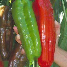 100Pcs Pepper Seeds Giant Hybrid Sweet Pepper DIY Home Garden Vegetable Plant