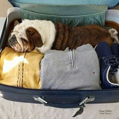 This is where my pug wanted to travel before he crossed the rainbow bridge. Best. Dog. Ever.