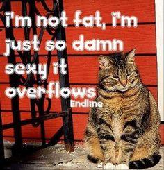 Funny Quotes – 35 Pics