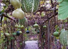 Vegetable Arbor! Build an arbor or trellis for your vine crops, and let them provide you with shade as they spread across the frame, producing flowers, grapes, cucumbers, melons, squash and gourds that hang overhead -- to stunning effect.