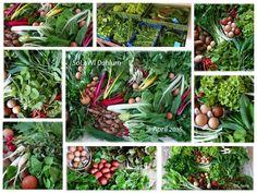 Meine Ernteanteile im April aus der Solidarischen Landwirtschaft Dahlum! Mehr unter makingsens.com!  #Solawi #Demeter #Gemüse #Veggielove #Solidarische Landwirtschaft #makingsens