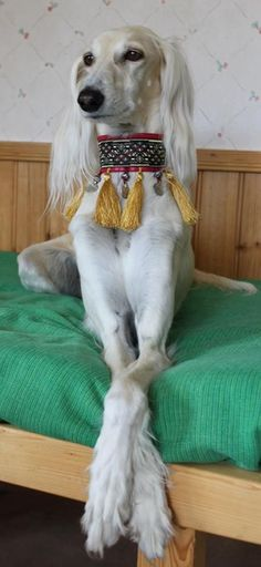best images and photos ideas about saluki dog - oldest dog breeds Beautiful Dogs, Animals Beautiful, Cute Animals, I Love Dogs, Cute Dogs, Hound Dog, Old Dogs, Dog Breeds, Doge