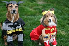 More Halloween Safety Tips From PetMD   Visit us online!! www.westfriendshipanimalhospital.com