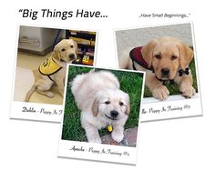 *Well, almost a perfect puppy..... I Want A Perfect Puppy! Tell Me More... My name is Colby Morita, I created the Puppy In Training blog to tell our story about raising and training guide and serv...