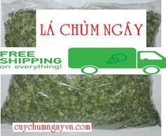 Cây Chùm ngây l Trà chùm ngây l Hạt chùm ngây l Rau Chùm ngây http://caynongaydat.vn