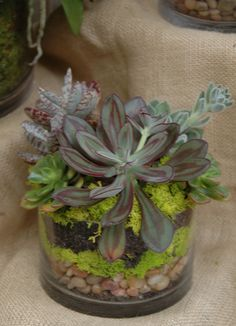 low glass cylinder displays layers of reindeer moss and polished pebbles and is topped with succulents.