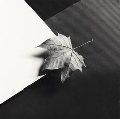 Robert Mapplethorpe 1946 - 1989 'LEAF', 1986 Vintage silver print, dry-mounted to card. Signed, dated 86 and numbered 4/10 in black ink in the lower margin. Signed and dated 1986 in the copyright stamp on the reverse of the card.