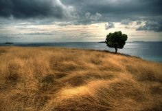 Lonesome tree on Seraya island, Flores, Indonesia