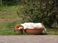 Животные, которые спят там, где хотят