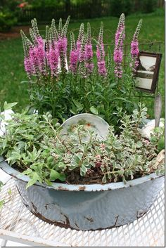 "Adorable ""junk garden"". Big old rustie dish pan with flowers and a few pieces of old, old china, make up a container garden. My Mother, grew the tall lavender flower when I was child...another Oldie but Goodie. Wish could find some for the garden now."