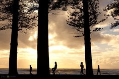 'Three Pines, Four People' - the perfect representation of a typical morning in Manly, Sydney. #manly #manlybeach #sunrise