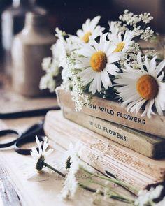 All Nature Beauty 37 Ideas Book Aesthetic, Flower Aesthetic, Aesthetic Vintage, Aesthetic Photo, Aesthetic Pictures, Nature Aesthetic, Aesthetic Girl, Book Flowers, Wild Flowers