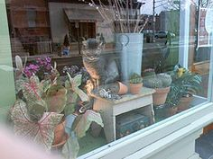 Cat in flower shop window
