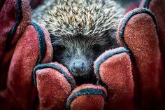 Лучшие фотографии животных прошлой недели http://chert-poberi.ru/interestnoe/luchshie-fotografii-zhivotnyx-proshloj-nedeli-2.html