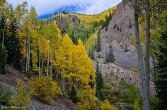Nellie Creek Aspens | Flickr - Photo Sharing!
