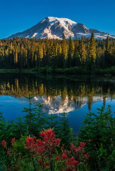 Mt. Rainier - Mt. Rainier reflection and Indian Paintbrush at Reflection Lakes, Mount Rainier National Park. Thanks for looking!