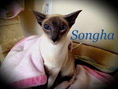 Songha