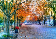 Boa noite :D Cores de Outono quando parece ter acabdo o Verão de S. MArtinho com que fomos brindados nos últimos dias em Arcos de. Na imagem a Avenida dos Centenários (antigo Campo do Trasladário) durante a tarde de hoje
