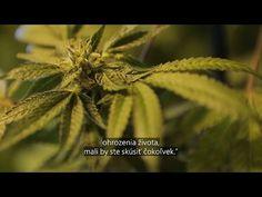 VIDEO: Marihuana ako liek - InfoVojna Plants, Plant, Planets