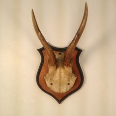 Antique Roe Deer Antlers by FareWellTrading on Etsy, $85.00