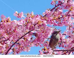A bird with cherry blossom behind blue sky on japan