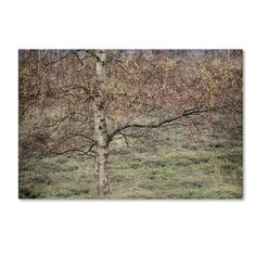 Shop for Cora Niele 'Birch' Canvas Art. Get free delivery at Overstock.com - Your Online Art Gallery Store! Get 5% in rewards with Club O! - 19203074