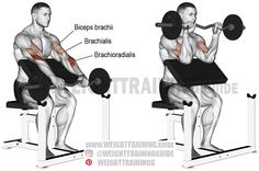 biceps workout As with all reverse curl exercises, the EZ bar reverse preacher curl is great for building both the forearm and the upper arm. Bar Workout, Gym Workout Tips, Weight Training Workouts, Biceps Workout, Squat Workout, Training Exercises, Reverse Curls, Best Shoulder Workout, Good Back Workouts