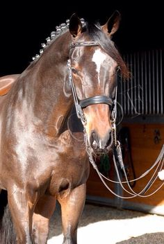 My absolute dream horse. Gorgeous boy.