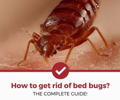 62 Best Bed Bugs images in 2017 | Bed bugs, Bugs, Bed