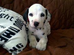 aaaaah!!! So cute!!!