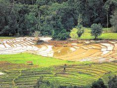 Paddy fields in Passara near Badulla