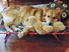 il mio adorato cane Ciccio e il suo orsacchiotto preferito