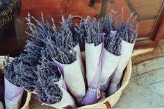 Lavender. (by N.R. Savage)