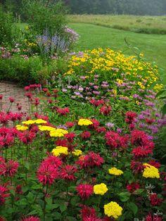 Butterfly and Hummingbird Garden Plans | butterfly1.jpg-milkweed, asters, beebalm- Kittatinny Valley State Park