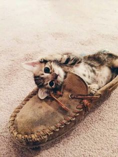 Loafers or kitten sleeping bags