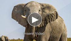 Unterkunft in Etosha Etosha ist einer der beliebtesten Wildparks im südlichen Afrika und wird mit seinen unterschiedlichen Camps den Wünschen aller Safariliebhaber gerecht. Die große Konzentration von Tieren bei den einzelnen Wasserlöchern macht jede Safari zu einem unglaublich lohnenden Erlebnis. Sie müssen nicht einmal das das Rest Camp