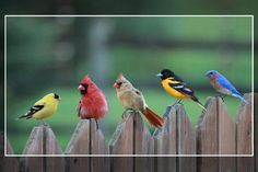 Birds of a color... Photo by Mike Bowen - Pixdaus.  Angry birds