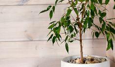 Liberon Bloom Paneelivaha - Colornova Oy Bloom, Plants, Plant, Planets