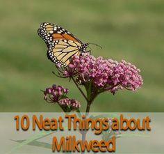 From Manitoba Home & Gardener's 10 neat Things e-newsletter