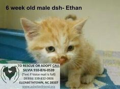 Urgent cats/kittens. Please network. All are to young to die!