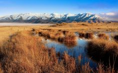 Nature Mackenzie Country,Twizel, New Zealand Wallpaper